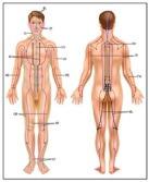 tcm-gallbladder